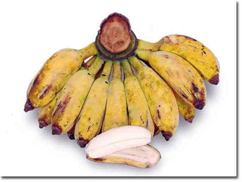 Image result for umbi pisang kepok